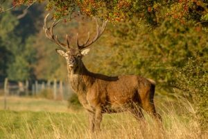 Hunting Land for Sale with Deer